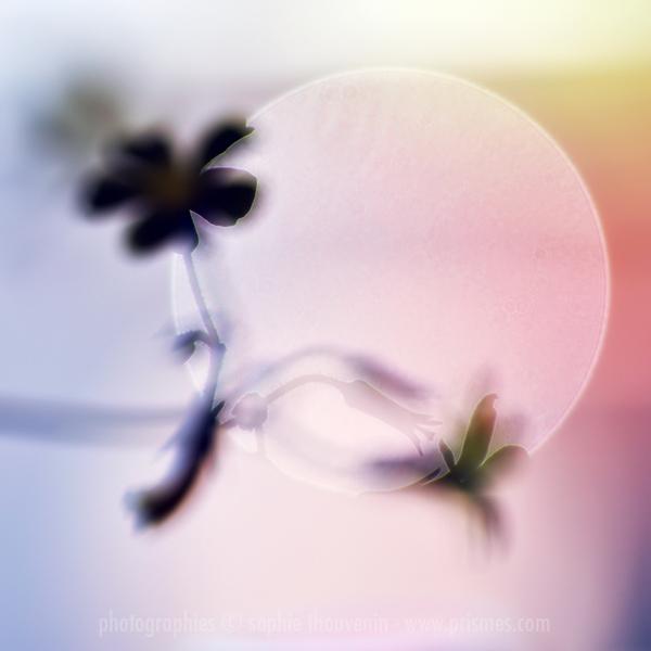 http://stillme.free.fr/blog/61.jpg